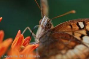 flutter copy
